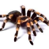 Аватар пользователя Spider