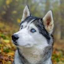 Аватар пользователя Evgeniy Kotov